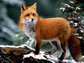 Акназар - Виды охоты - База охоты и отдыха на южном урале, Охота на медведя, Охота на кабана, Охота на лося, Охота на косулю, Охота на боровую дичь, Охота на зайца, Охота на лису, Охота на куницу, Охота на бобра, Охота на барсука, Охота башкортостан, Охотхозяйство Баймакский район, Охотхозяйство, башкирия